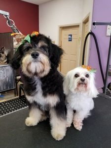 The pooch parlor pet grooming groomer training groomer books grooming salon and self service training academy book resources for home and professional groomers solutioingenieria Gallery